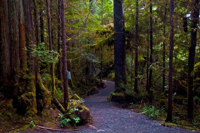 ucluelet-ancient-cedars-trail