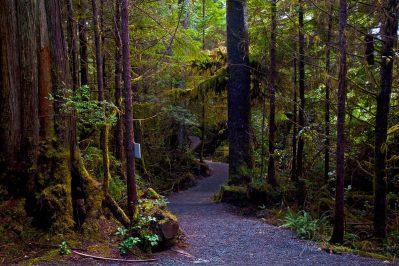 ucluelet-ancient-cedars-trail